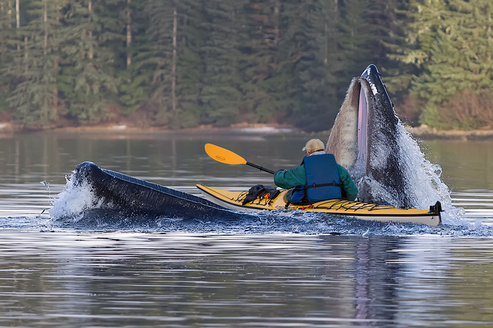 kayaker whale